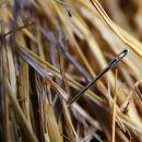 Иголка в стоге сена